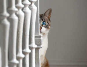 10 Important facts that cat lovers must understand