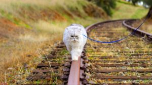 15 popular cat lovers of this world