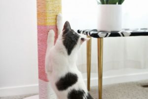 7 Beautiful cat accessories for the cat lovers
