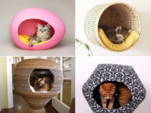 Things that cat lovers like to gift their furry pet