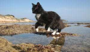 Why Su Pallosu beach of Sardinia is ideal vacation for cat lovers