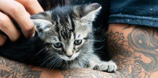 best cat tattoo ideas