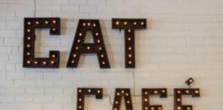 best cat cafe