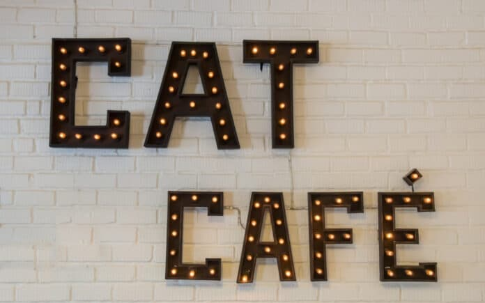 best cat cafe