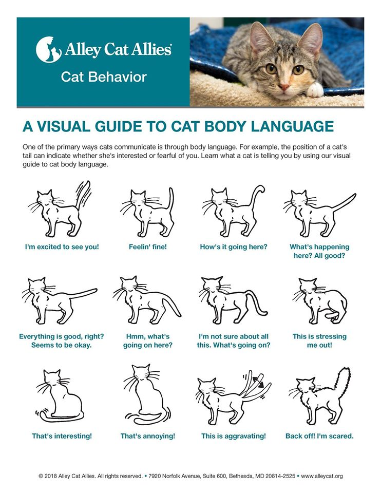 the meaning of different cat postures
