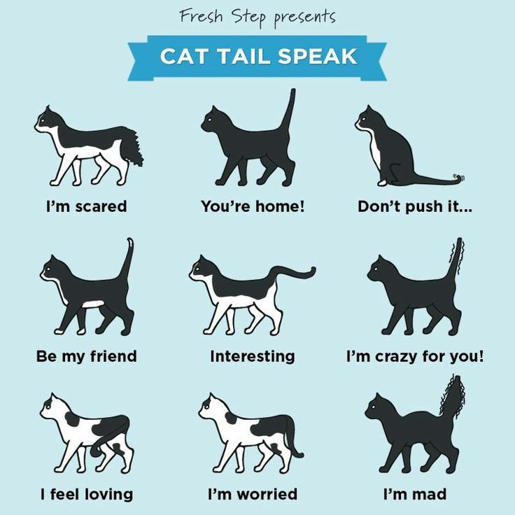 what does a cats tail mean