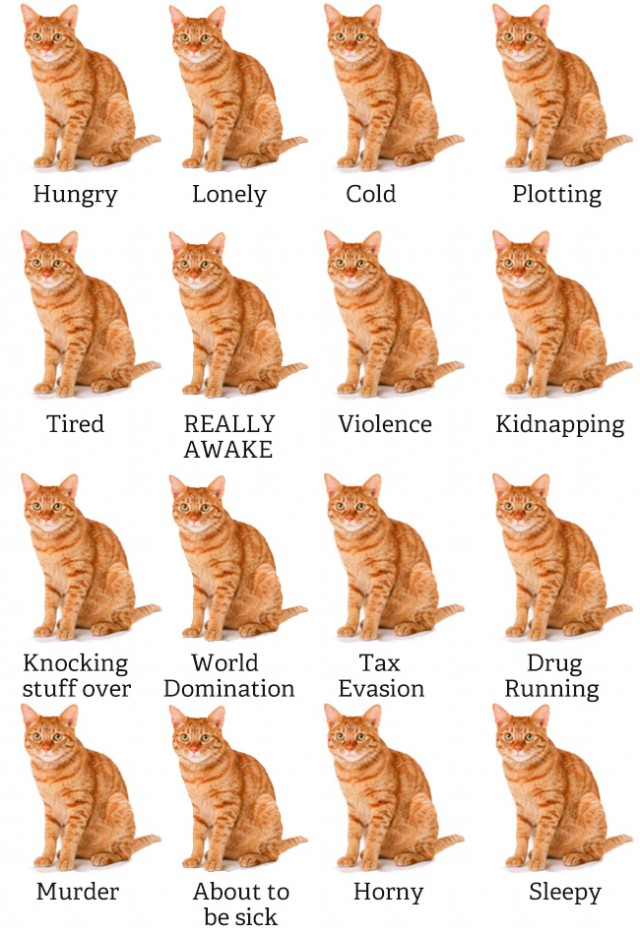 guide to cats mood