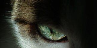 best cat art