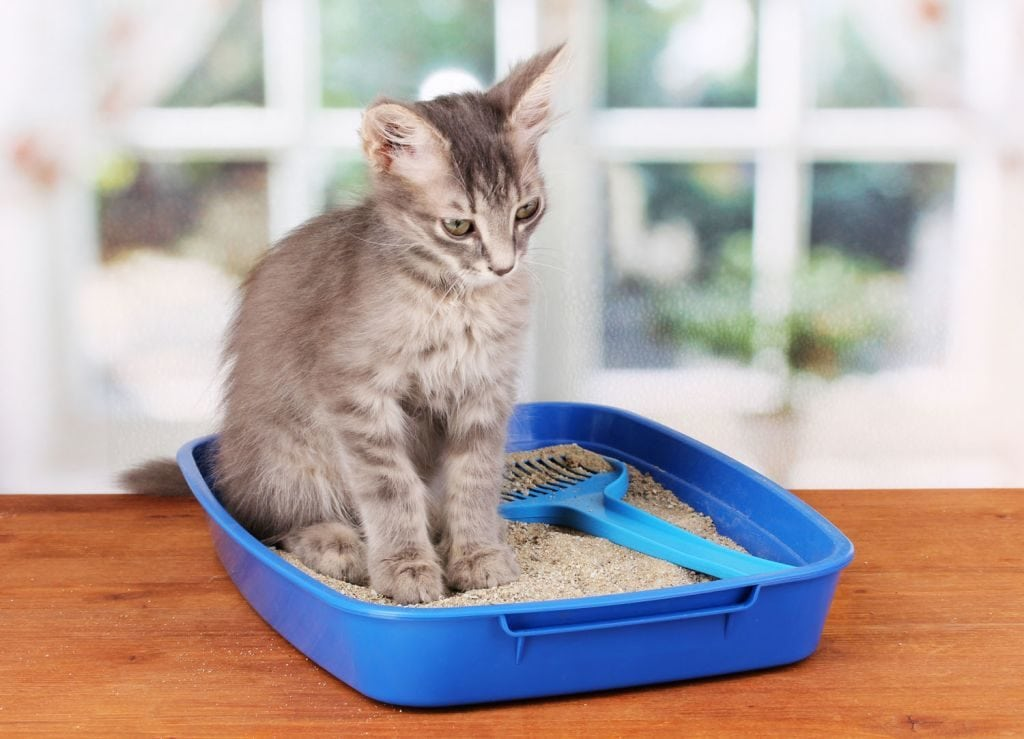 Constipation In Cats Facts You Need To Know About It