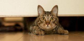 stress in cats