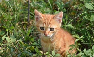 pediatric behavior in cats