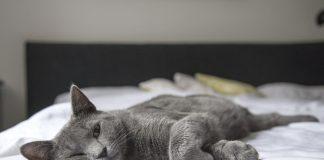 cat nose pad problems